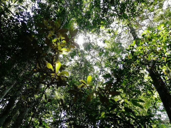 新研究显示亚马逊雨林遭受极端干旱的风险远远高于之前想象